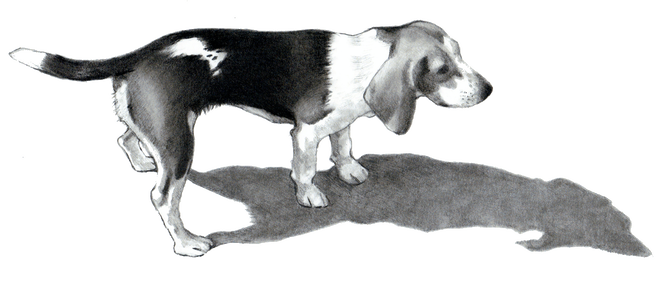 A beagle representing private puppy training huntsville ontario and dog training in huntsville ontario, and private puppy training in toronto and private puppy training in muskoka